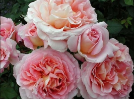 Abraham Darby, S