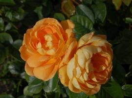 Bernstein Rose , F