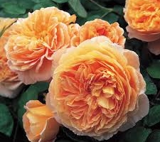 Crown Princes Margarete, S