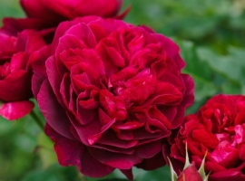 Darcey Bussell, S
