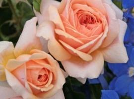 Garden of Roses, F  UUS! ADR
