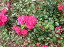 Gärtnerfreude-Toscana, S(Bod)  ADR