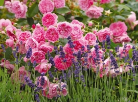 Harlow Carr, S