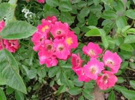 Maria Lisa, Multiflora