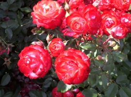 Planten un Bloomen, F  ADR